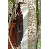 Nepenthes+sanguinea+%26%23039%3Bblack+beauty%26%23039%3B